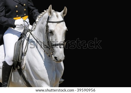 A portrait of gray dressage horse isolated on black - stock photo