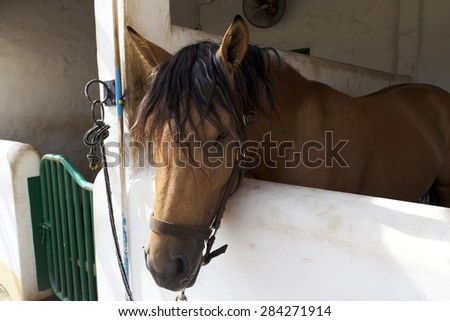 A portrait of horse in barn  - stock photo