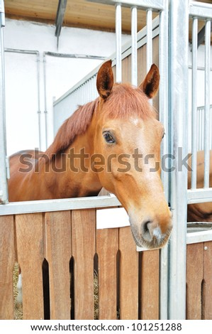 A portrait of horse in barn behind cage - stock photo