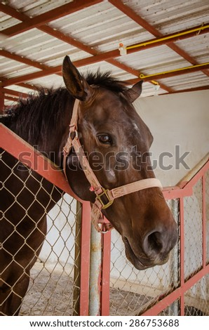 A portrait of old horse in barn behind cage - stock photo