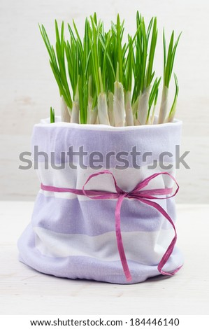 A pot of green leaves with a purple ribbon - stock photo
