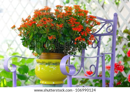 A pot with a flower in the garden3