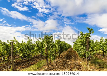 A prestigious vineyard in the countryside of Chianti (Tuscany, Italy), where the product is an excellent and famous Italian wine. - stock photo