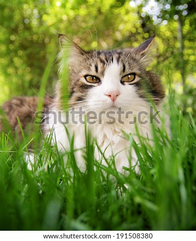 a pretty cat sitting in long grass - stock photo