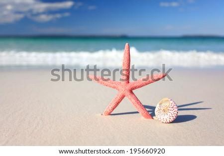 A pretty coral coloured sea star and seashell on the seashore - stock photo
