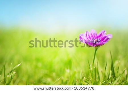 A pretty pink flower on grass with a blue sky.