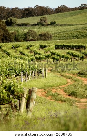 A pretty scene of vine yards - stock photo