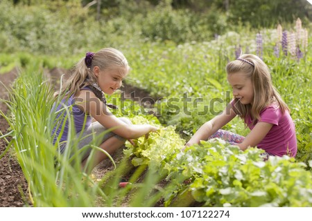A pretty two sister (age 7 and 9) with garden tools pulling weeds out of the vegetable garden. - stock photo