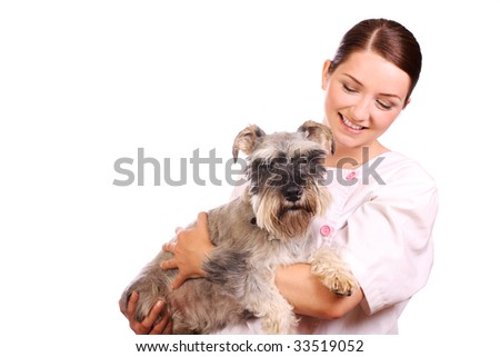 A pretty veterinarian holding a Miniature Schnauzer and smiling at him in a caring way.