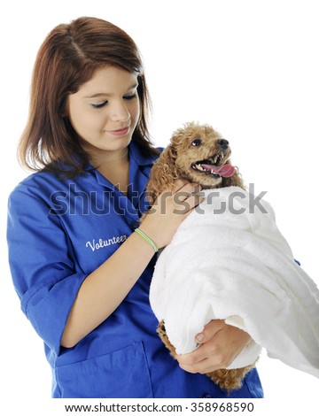 A pretty veterinary volunteer petting the patient she's holding -- an apricot toy poodle who is wrapped in a white towel. On a white background.