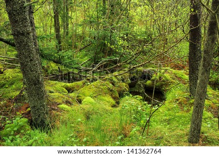 A pristine scene of fallen logs covered by moss in spring in the northern Maine woods