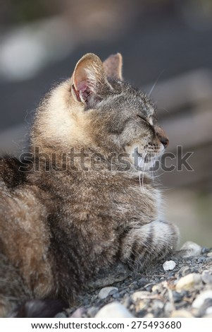 A Profile of a Wild Feral Cat Sleeping Outside on a Pile of Rocks - stock photo
