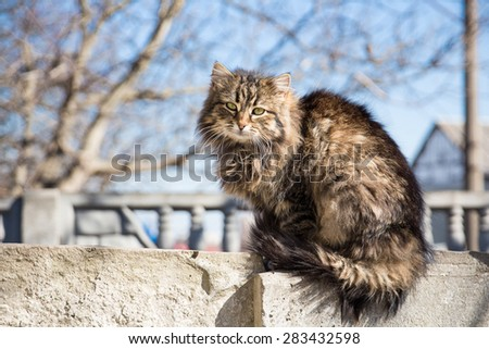 A proud grey cat sitting on the concrete fence - stock photo