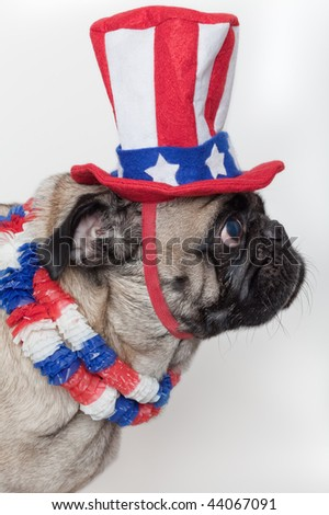 A pug dog in a costume with colors of the United States flag