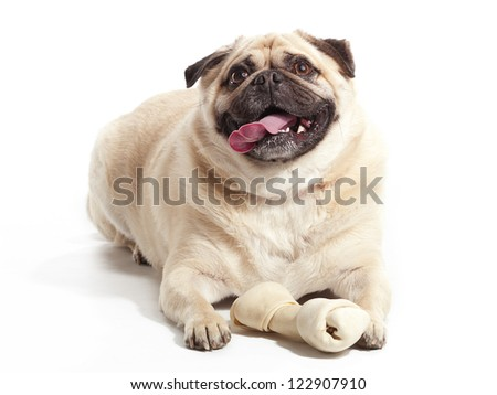 A pug laying on floor with a bone