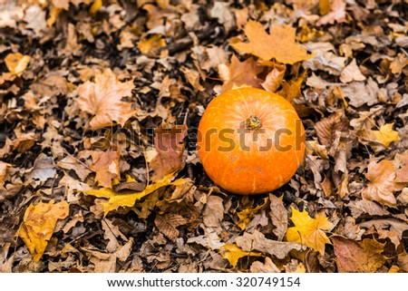 A pumpkin in autumn leaves. Halloween day