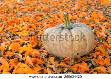 A pumpkin on the ground of the flame of forest flowers (Halloween concept) - stock photo