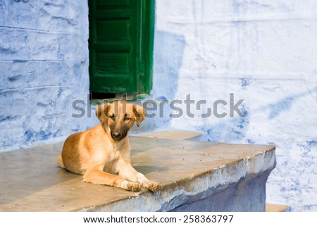 A pup of an Indian dog on the porch of a house in Jodhpur, India