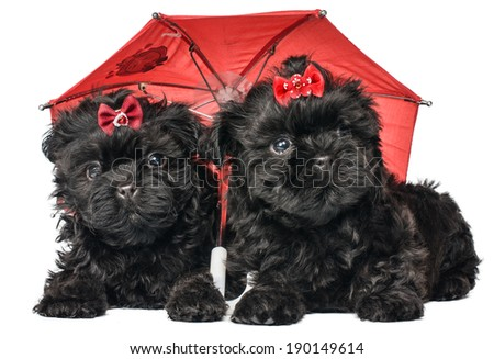 A puppies under the umbre - stock photo