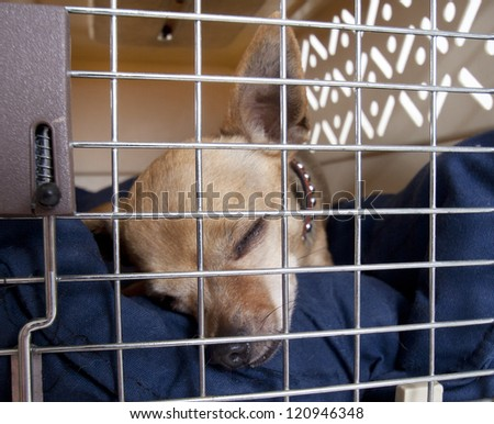 a puppy in a crate - stock photo