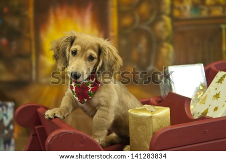A puppy poses in a sleigh full of presents - stock photo