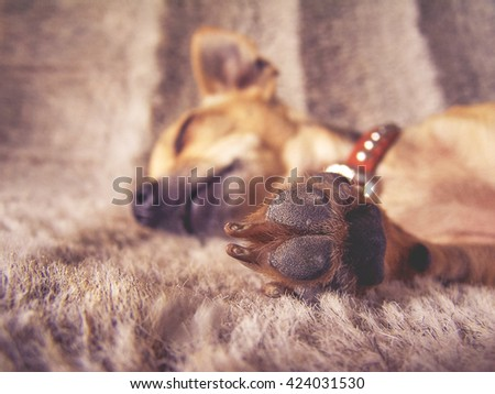 a puppy sleeping on a furry blanket with his paw in front of his face (VERY SHALLOW DOF) toned with a vintage retro instagram filter effect app or action - stock photo
