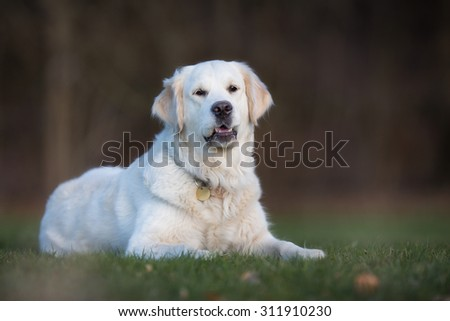A purebred dog without leash outdoors in the nature on a sunny day.