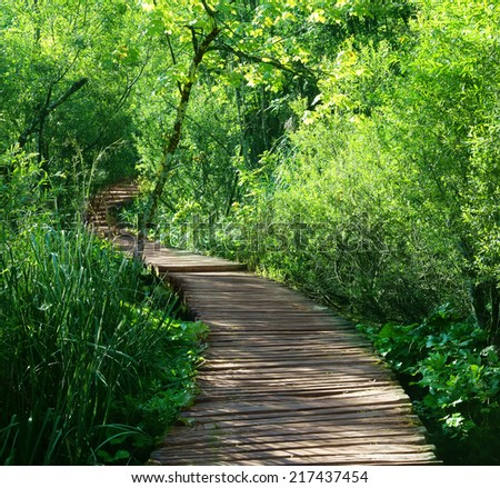 a quiet lane on a beautiful forest. - stock photo