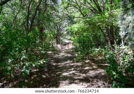 A quiet trail leads through a wooded area.