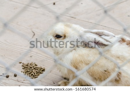 A rabbit eating pelleted feeds in cage - stock photo