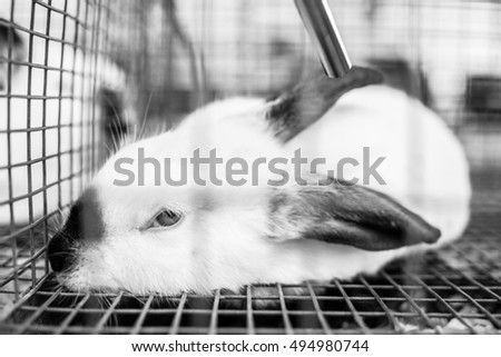A rabbit sits in a cage.