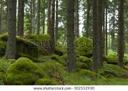 A rainy day in the forest. - stock photo