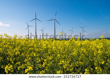 A rapeseed field with wind engines in the back