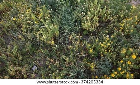 A rare vegetation - stock photo