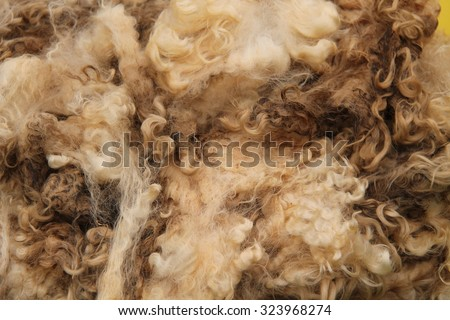 A Recently Sheared Wool Fleece from a Sheep. - stock photo