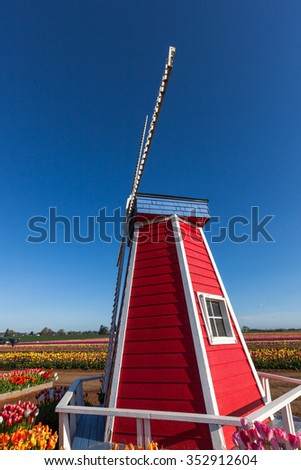 A red and white windmill on a tulip farm in the springtime in Oregon with a clear blue sky background. - stock photo