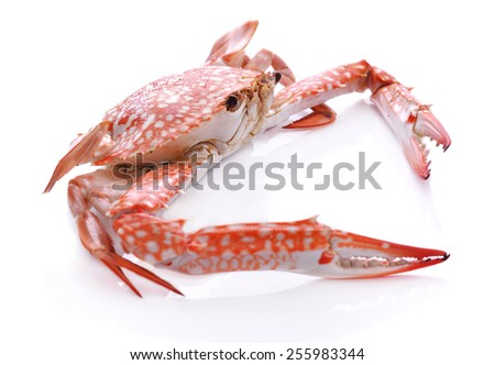 A Red crab isolated on white background - stock photo