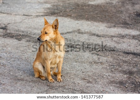 A red dog sitting on the road