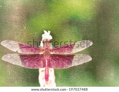 A red dragonfly in rest green background - stock photo