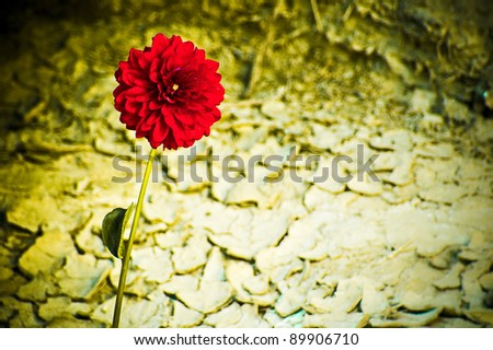 A red flower growing in the arid desert. - stock photo