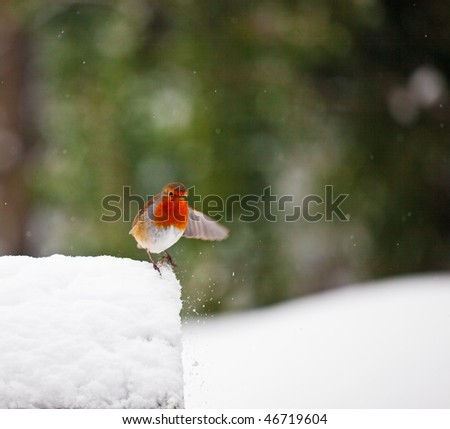 A red robin on a snowy birdhouse in winter. Robin has a wing outstretched (with motion blur) as if gesturing to something. Photo has short depth of field and space for your text.