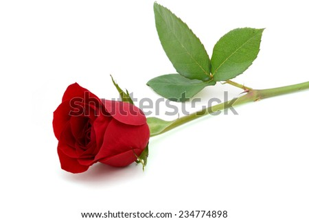 A red rose day - stock photo