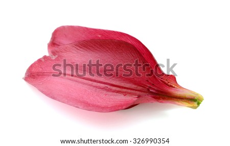 A red royal lily petal - stock photo