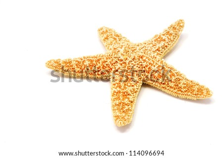 a red sea star isolated on white background - stock photo