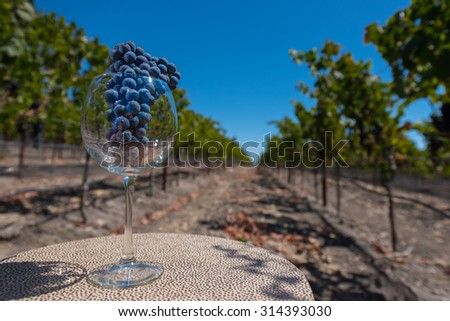 A red wine glass on a table in a vineyard with grapes for red wine - stock photo