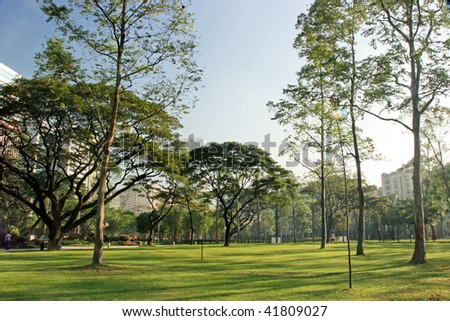 A relaxing scenery of a lush greenery