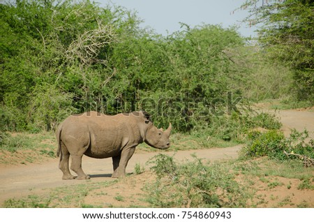A rhino in South Africa
