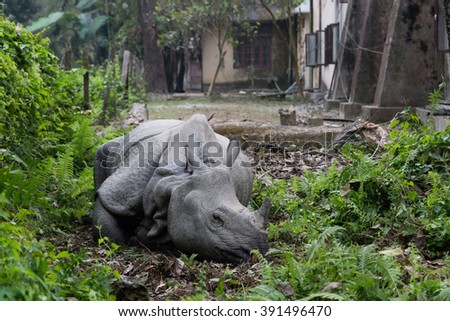 A Rhino lying in a garden in the village of Chitwan National Park, Nepal - stock photo