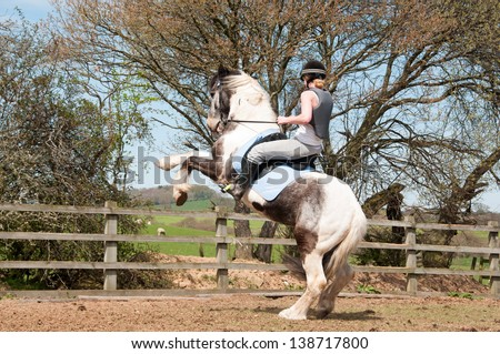 A rider hanging on tight while her misbehaving horse rears - stock photo