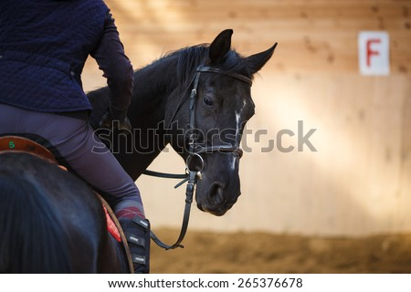 A rider on the horse in training - stock photo